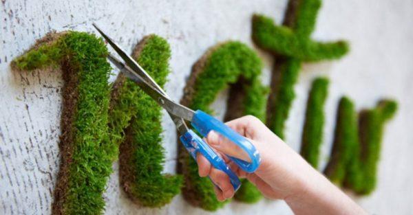 Green Tag - Créez votre graffiti végétal
